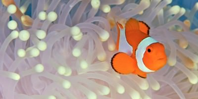 Clown Fish Slider