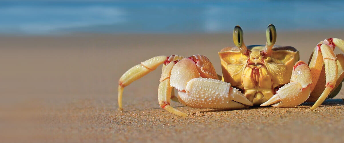 Crab with text